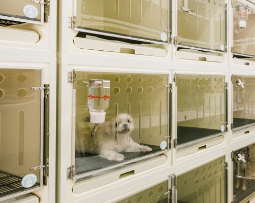 シニア犬一時預かり・介助サービス