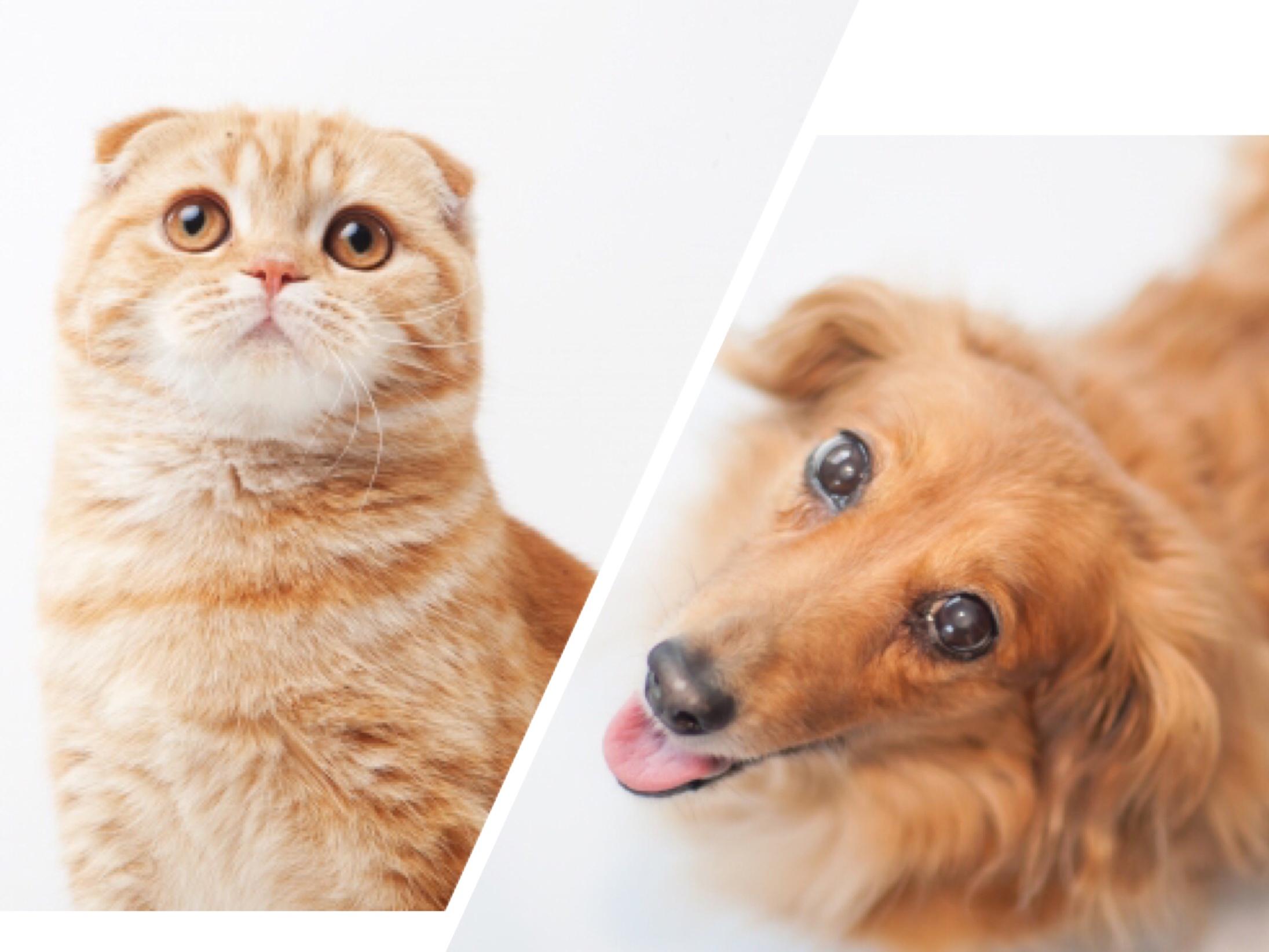 2018/03/02 「人と犬と猫のごはんの違い」in 阪急ハロードッグフェスタ