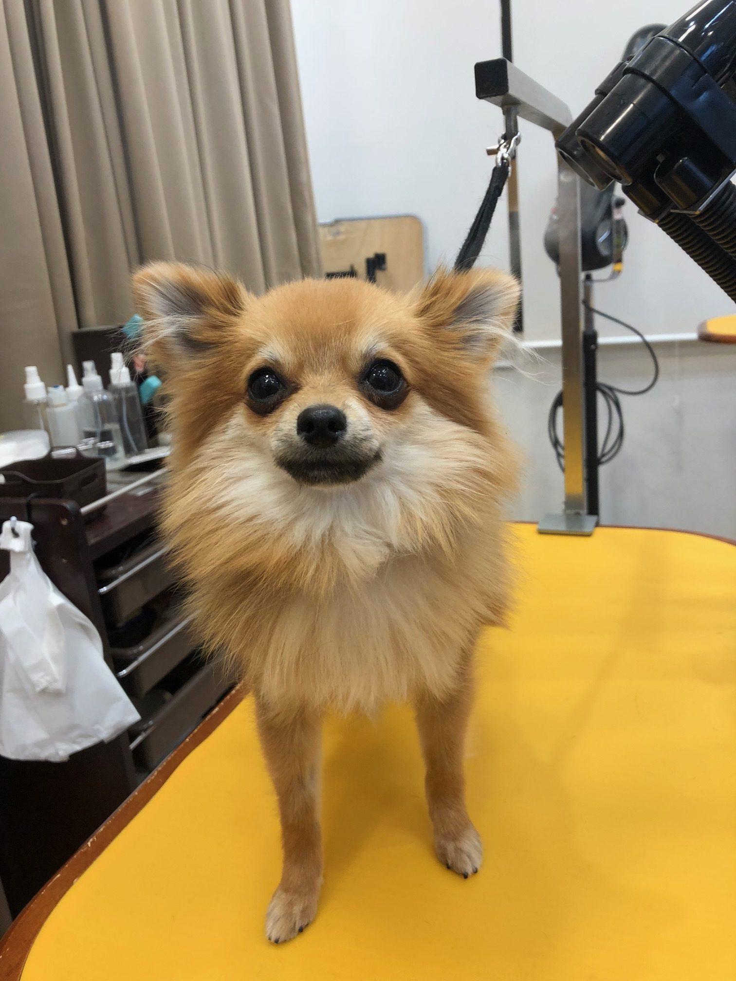 ミックス犬のキンちゃん★