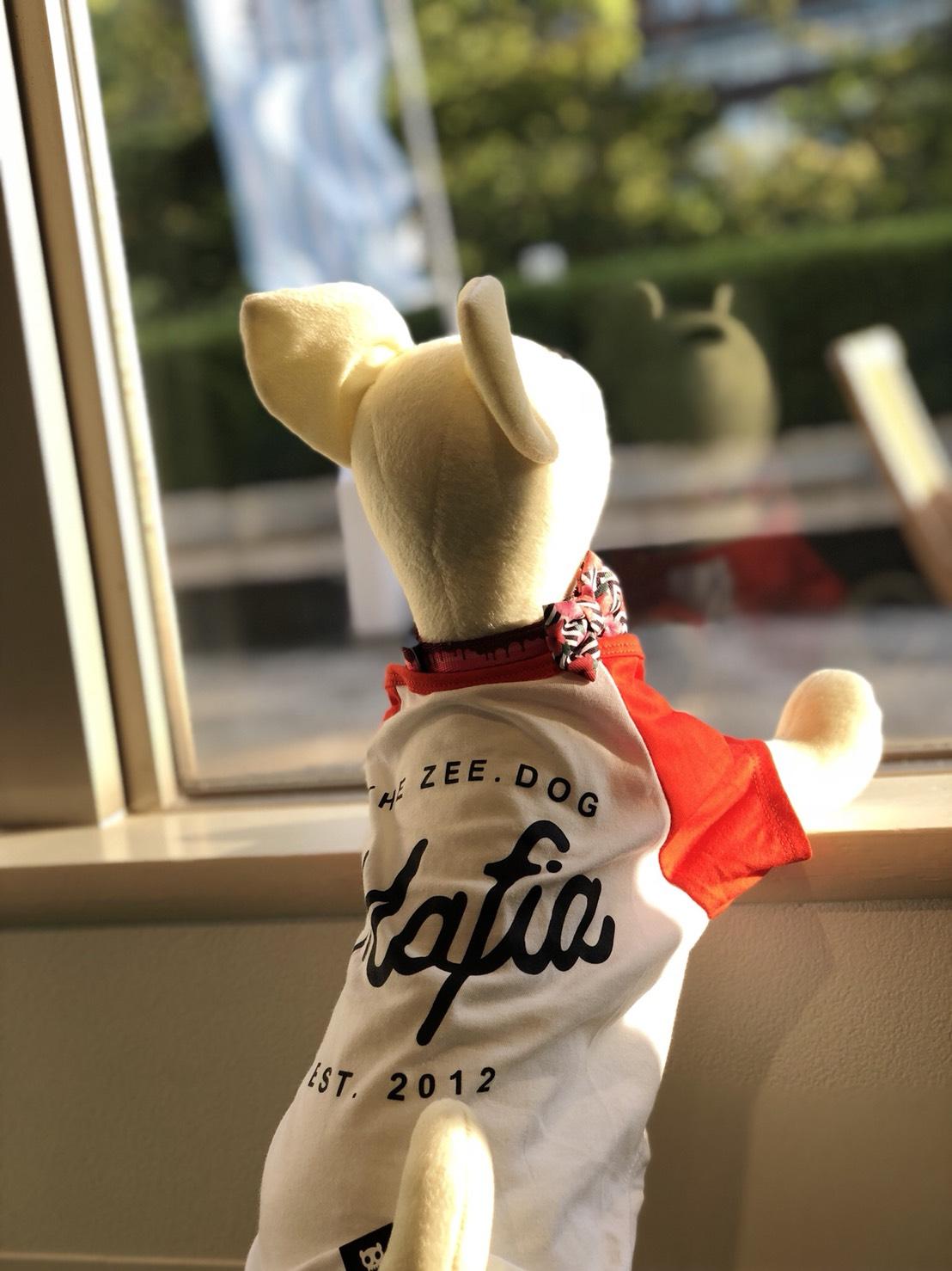 2018/05/02~16 ソリオ宝塚店 阪急ハロードッグ ZeeDog特別特集