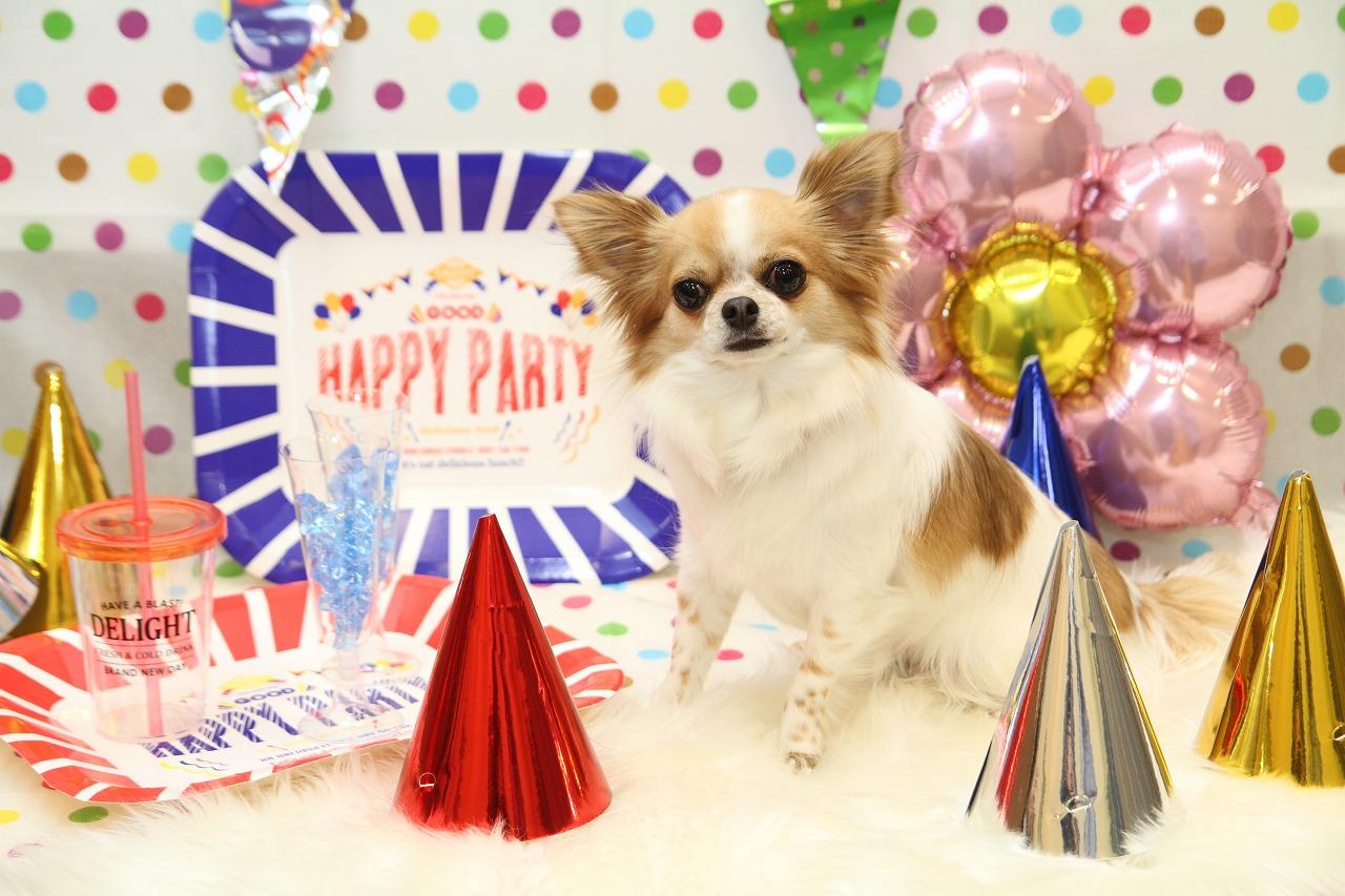 2018/06/17 西宮 Happy Party撮影会