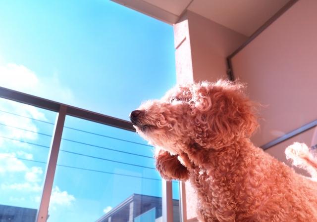 2018/06/09 西宮「阪急ハロードッグ健康セミナー 応急措置~熱中症~」