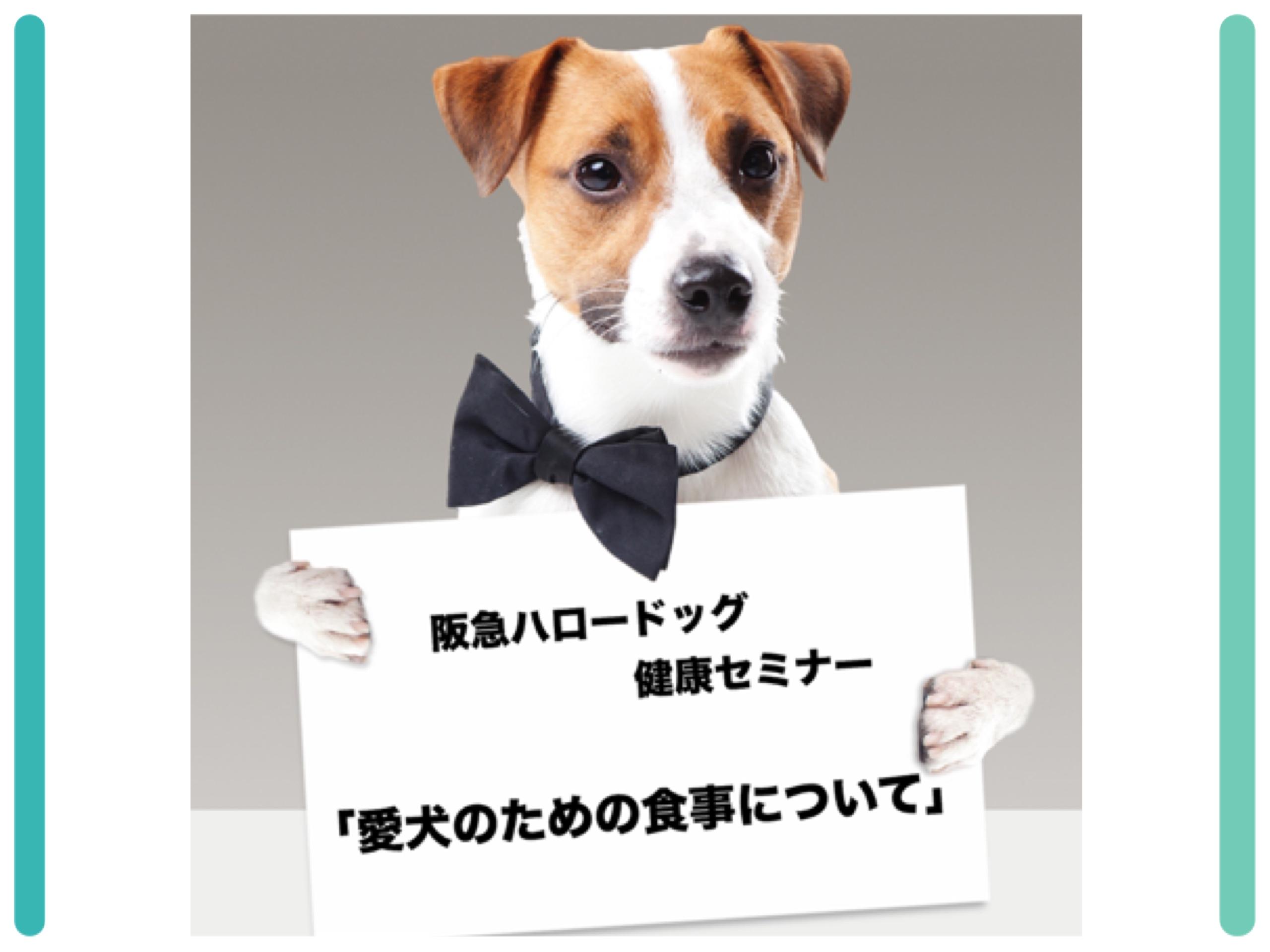 2018/07/14 西宮「阪急ハロードッグ健康セミナー 愛犬のための食事について」