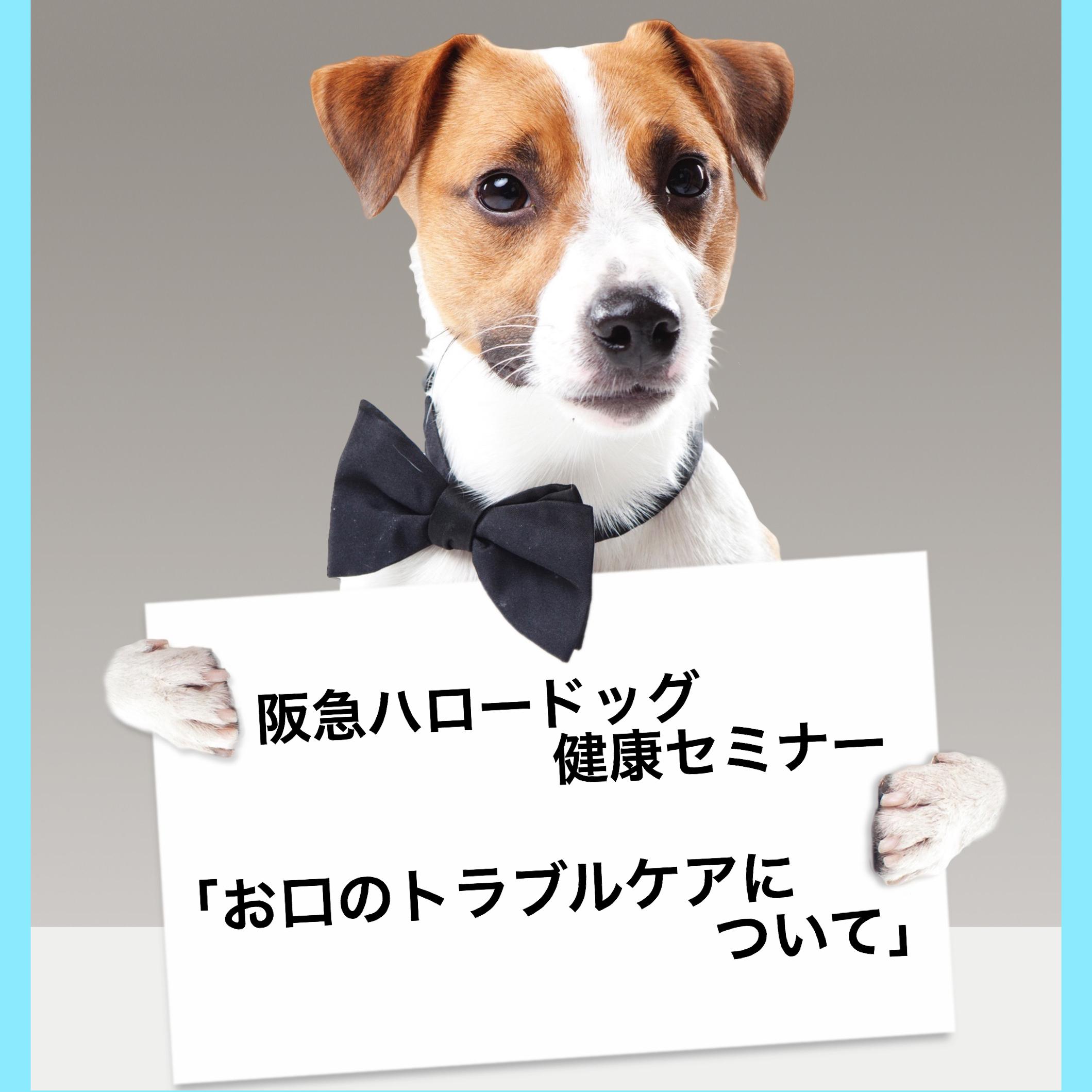 2018/08/11 西宮「阪急ハロードッグ健康セミナー お口のトラブルケアについて」