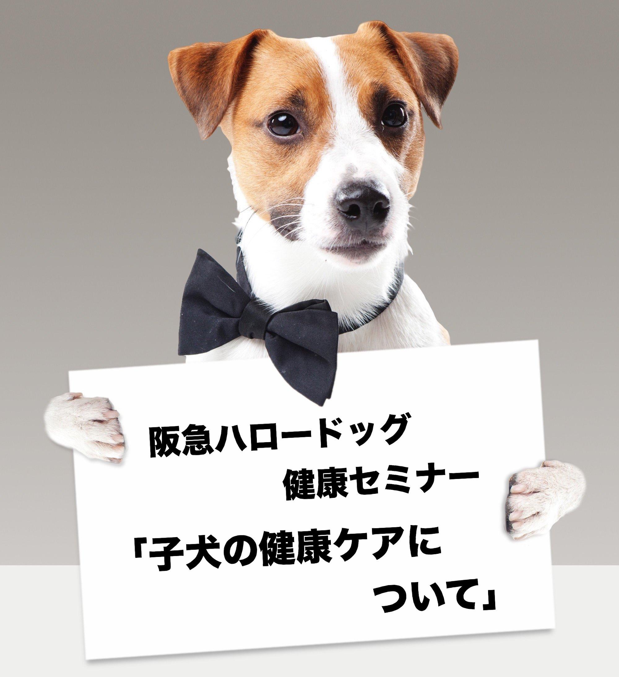 2018/09/08 西宮「阪急ハロードッグ健康セミナー 子犬の健康ケアについて」
