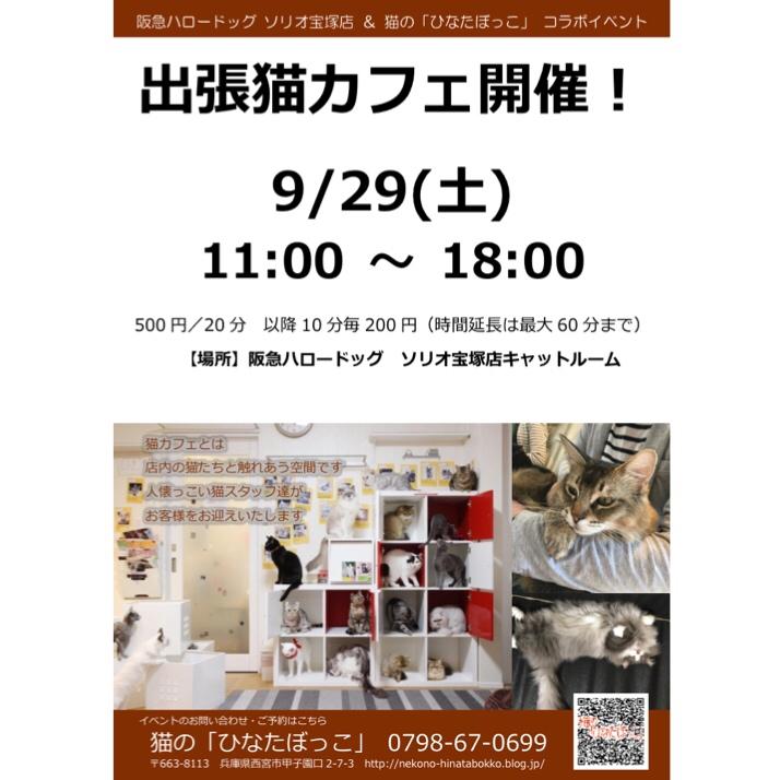2018/09/29 ソリオ宝塚店 猫の「ひなたぼっこ」コラボイベント 出張ネコカフェ!