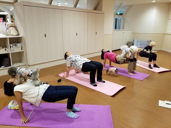 2018/10/20 ソリオ宝塚店 ドッグヨガ