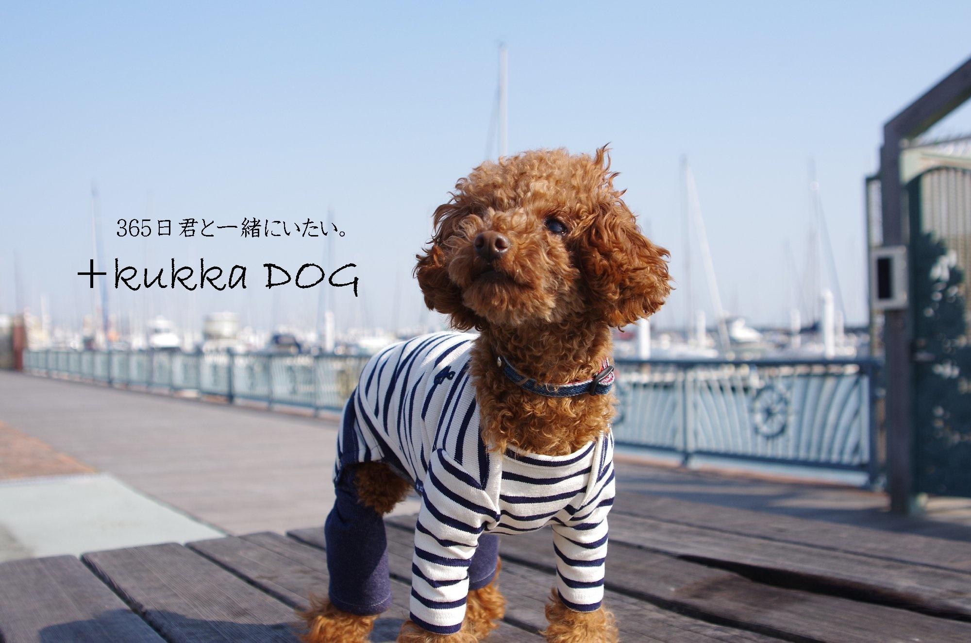 ソリオ宝塚 『kukkadog』