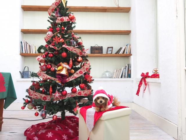 2018/11/30-12/4 ソリオ宝塚店 Christmas party