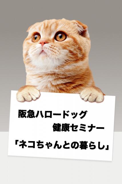 2018/11/10 西宮 阪急ハロードッグ健康セミナー 「ネコちゃんとの暮らし」
