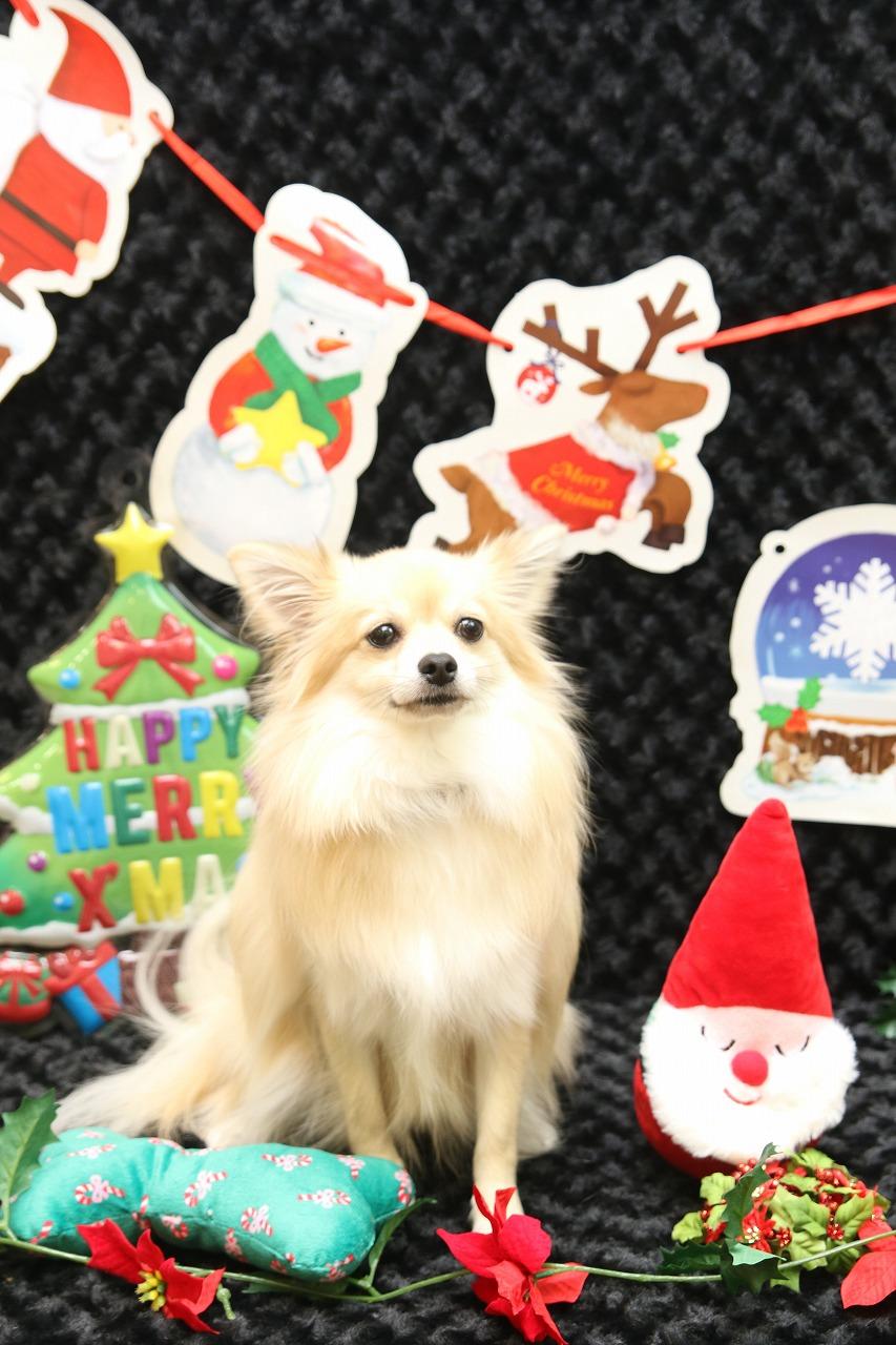 2018/12/09 西宮 クリスマス撮影会