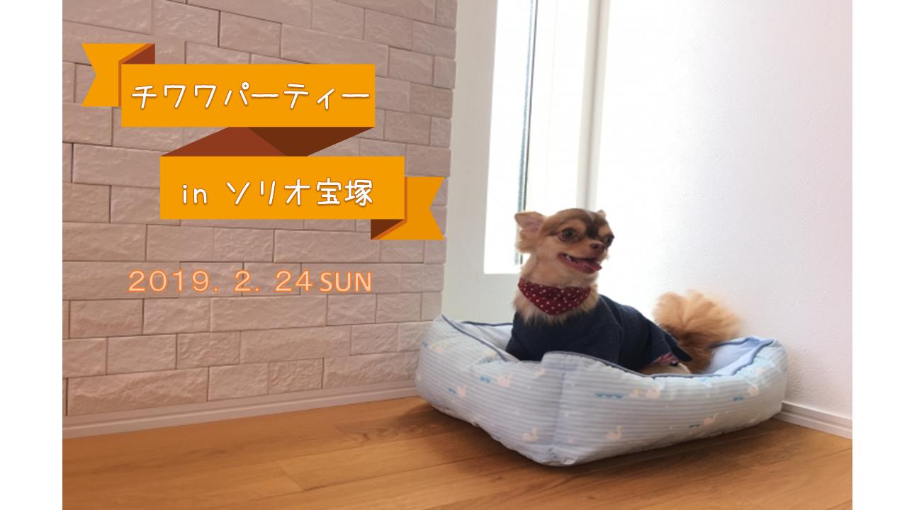 2019/2/24 ソリオ宝塚 「チワワパーティー」