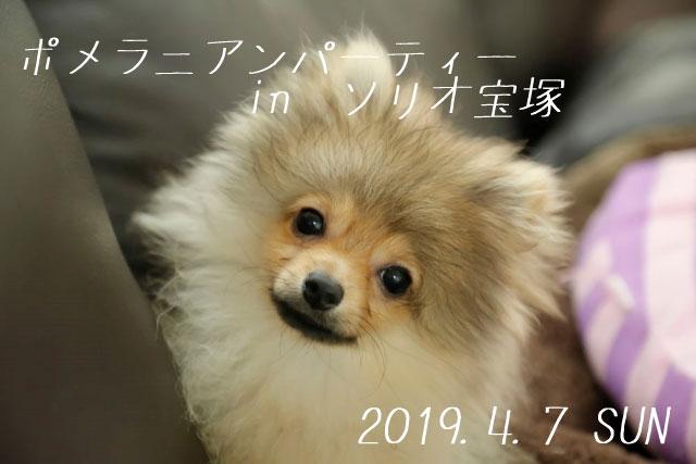 2019/4/7 ソリオ宝塚「ポメラニアンパーティー」