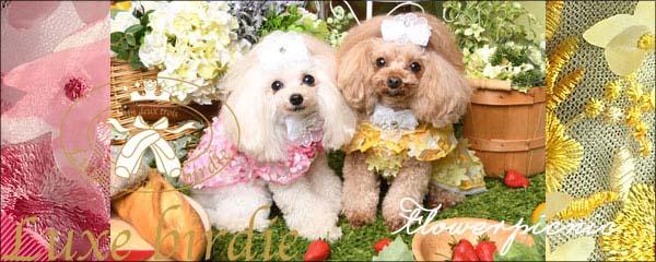 2019/04/03-04/09 西宮 愛犬とリュックスな毎日を「Luxe birdie」