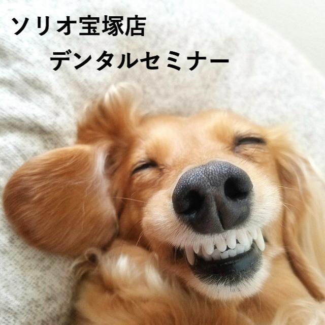 2020/09/20 宝塚 「デンタルケアセミナー」