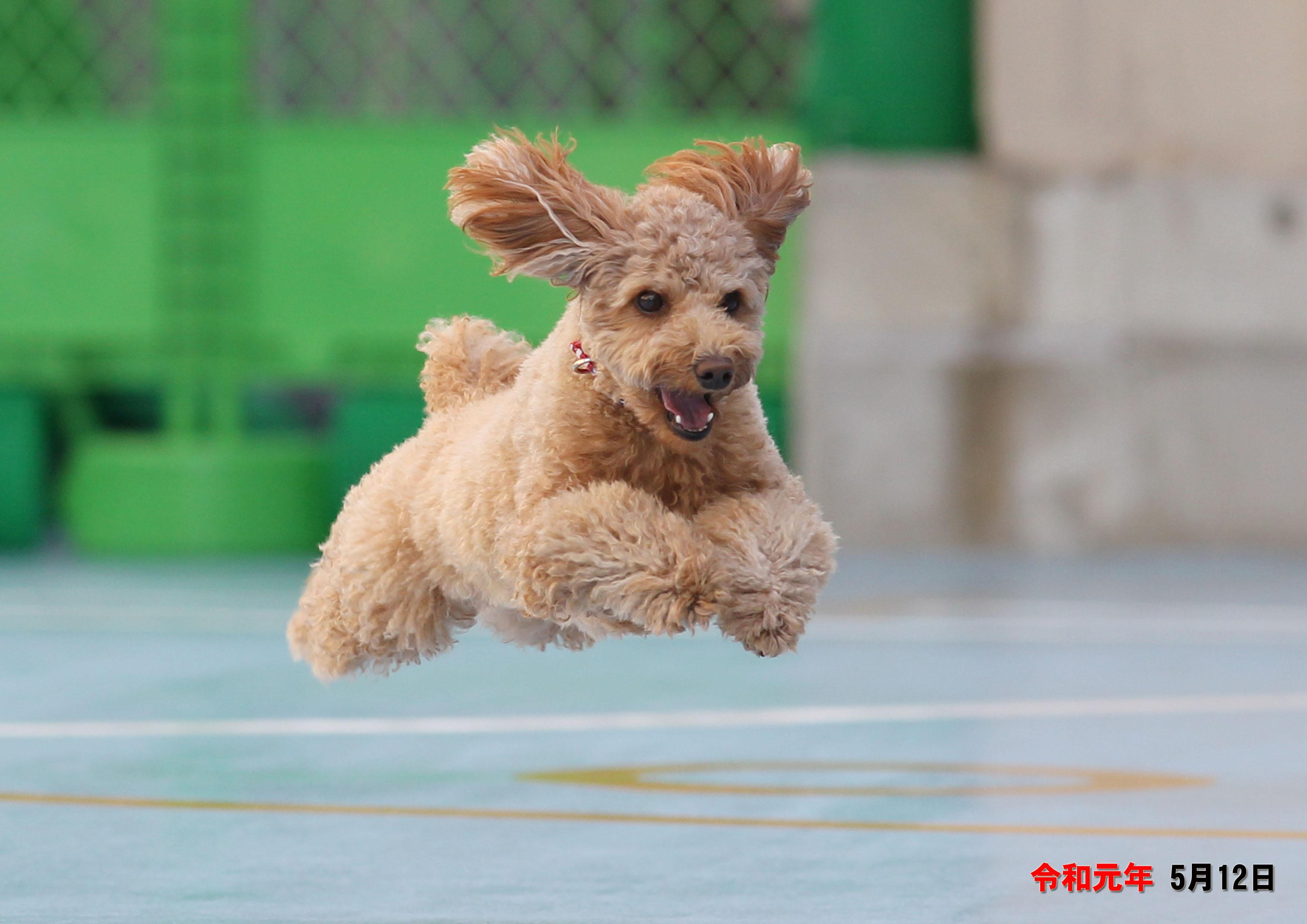 2019/05/12 西宮 飛行犬撮影会