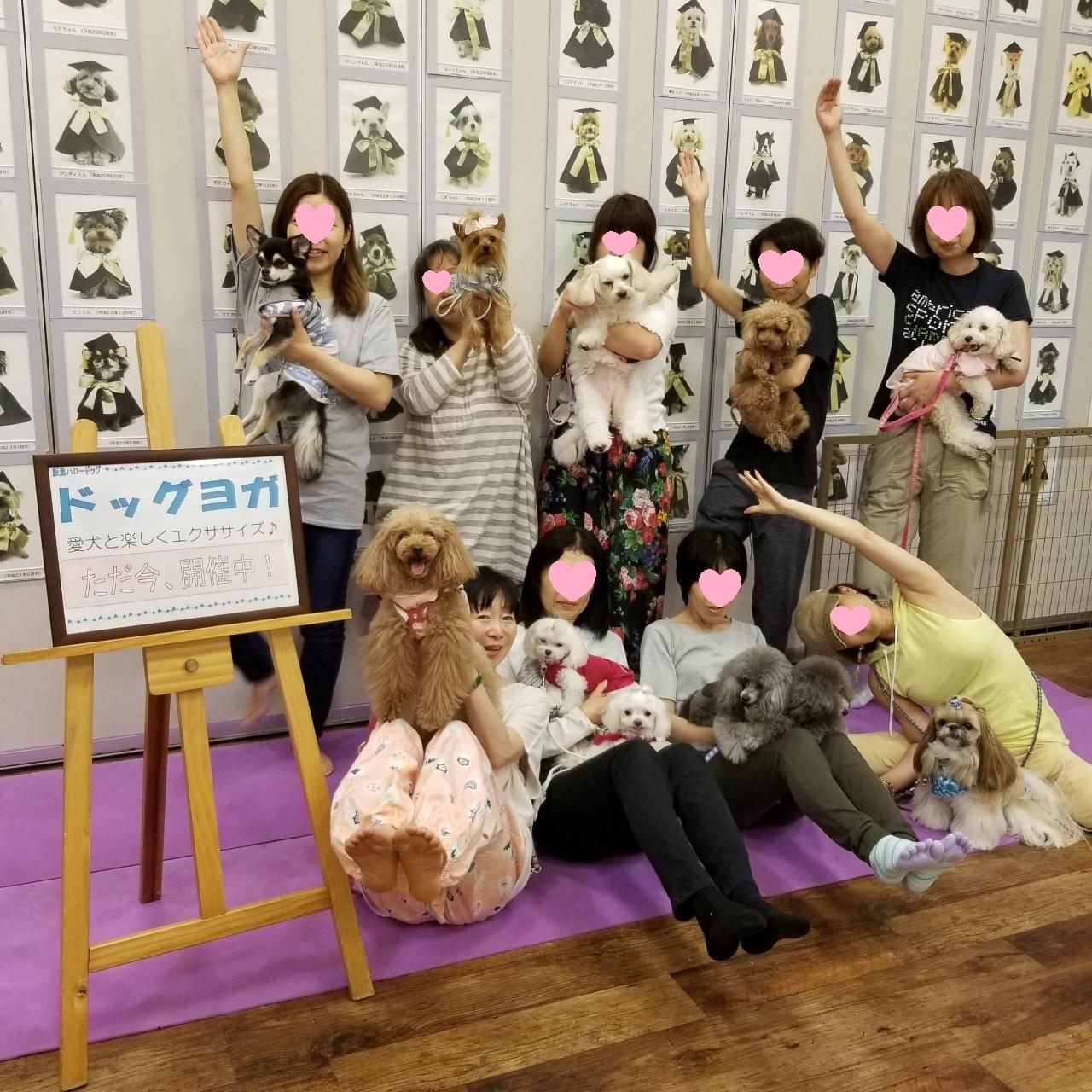 2019/7/4 西宮阪急 ドッグヨガ