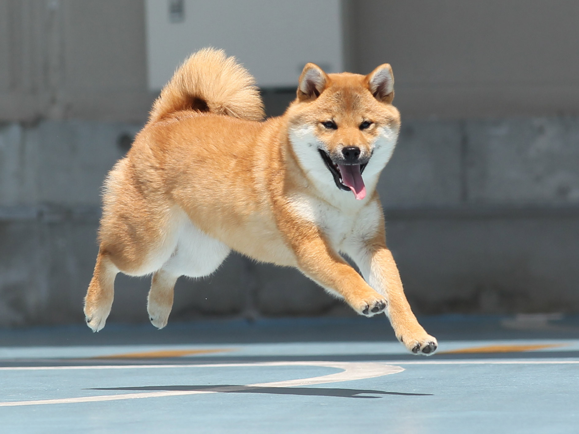 2019/12/08 西宮 飛行犬撮影会