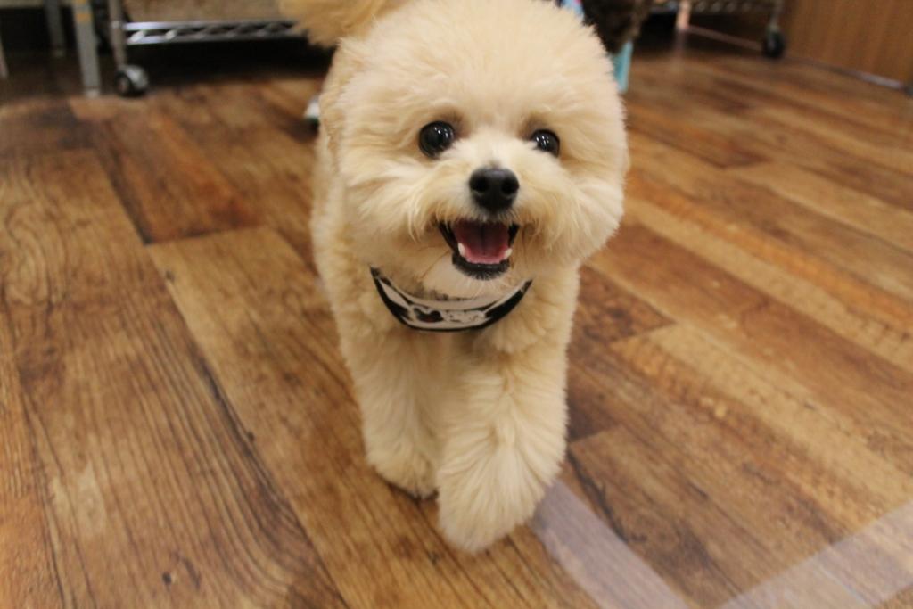 2020/02/09 西宮 小型MIX犬大集合
