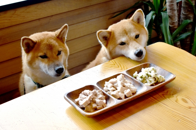 2020/3/28-29 宝塚 ペット栄養管理士によるセミナー 愛犬の「ごはん」について