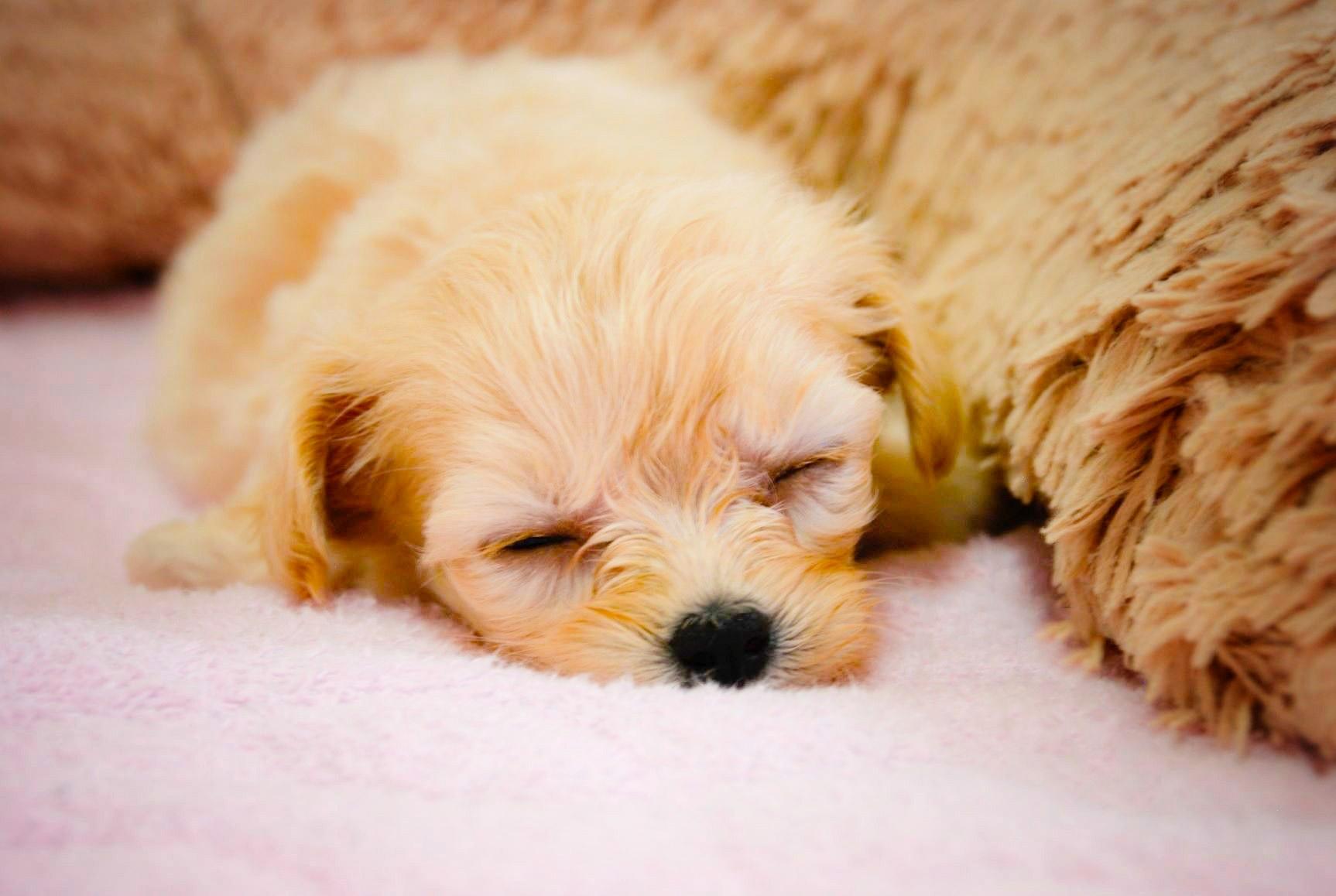 2020/04/18 宝塚 健康セミナー「子犬の健康ケアについて」