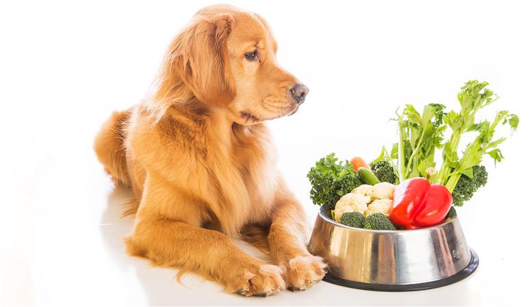【フードコラム Vol.5】『免疫力を高める』食事のヒント