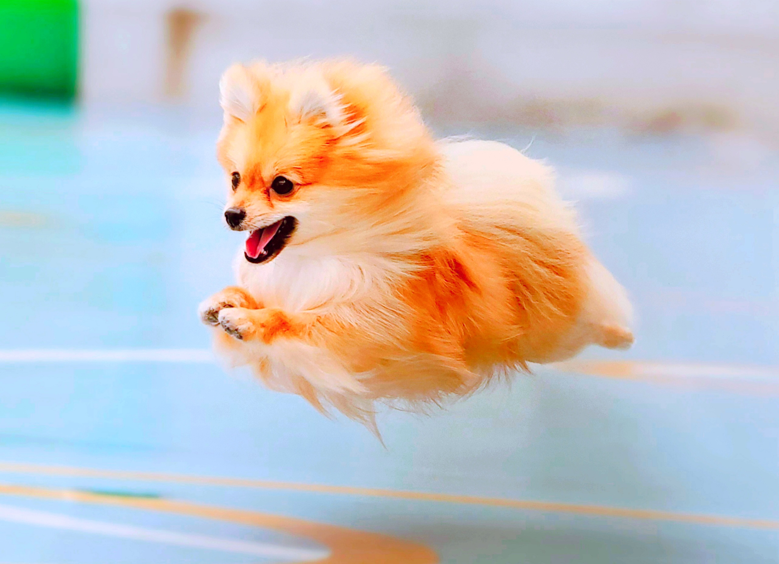 2020/11/14 西宮 飛行犬撮影会