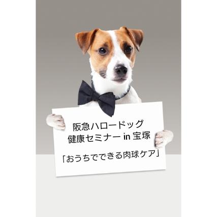 2020/10/17 宝塚 健康セミナー 「おうちでできる肉球ケア」