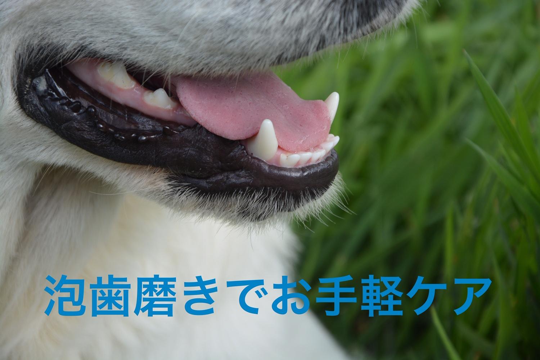2020/10/18 宝塚 泡歯磨き「艶色」お試し会