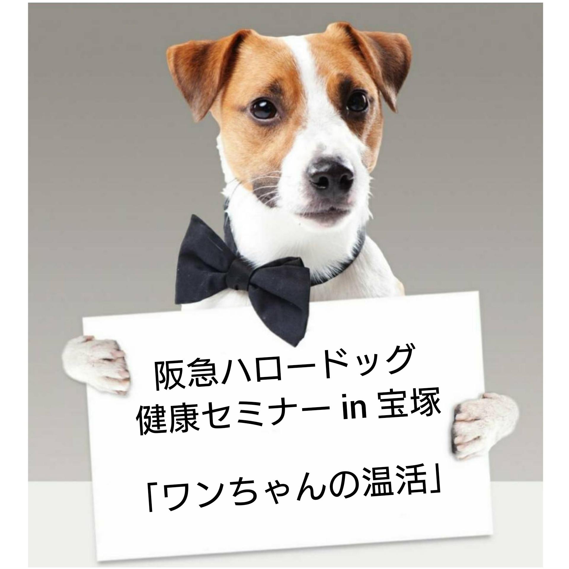 2020/12/19 宝塚 健康セミナー「ワンちゃんの温活」