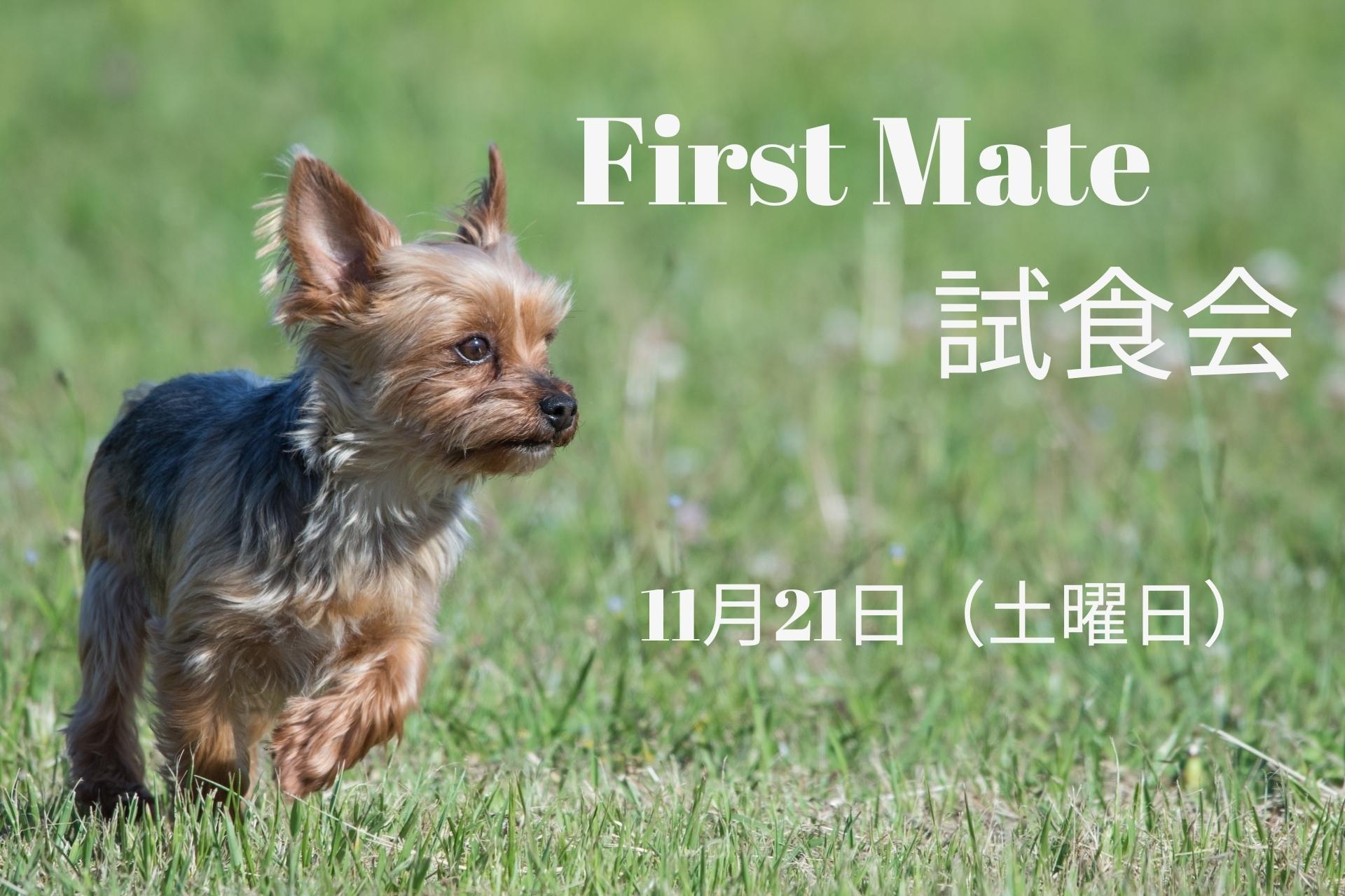 2020/11/21 宝塚 「First Mate」試食会