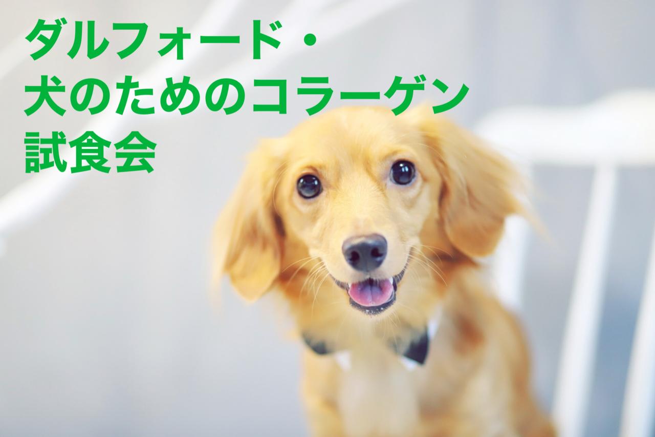 2020/11/15 宝塚 「ダルフォード」試食会