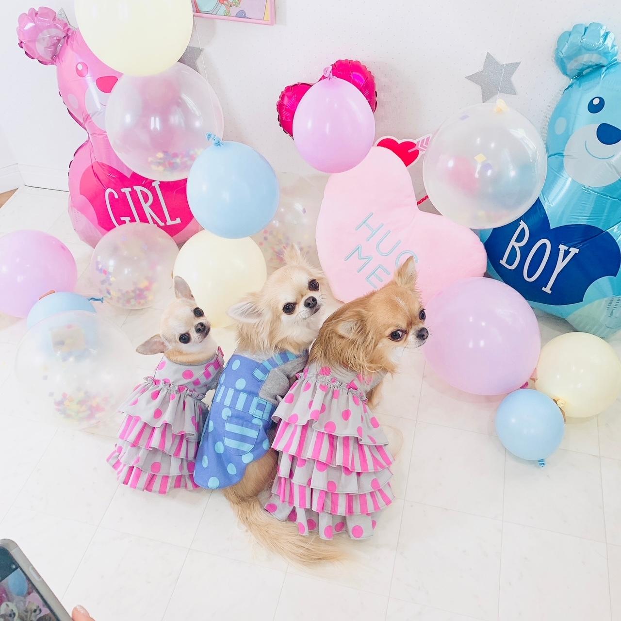 2021/2/24-3/9 西宮店 Candy Buppie