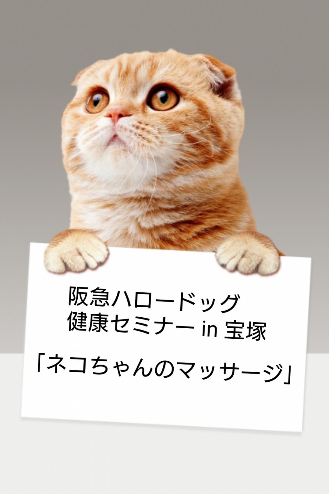 2021/2/20 宝塚 健康セミナー「ネコちゃんのマッサージ」