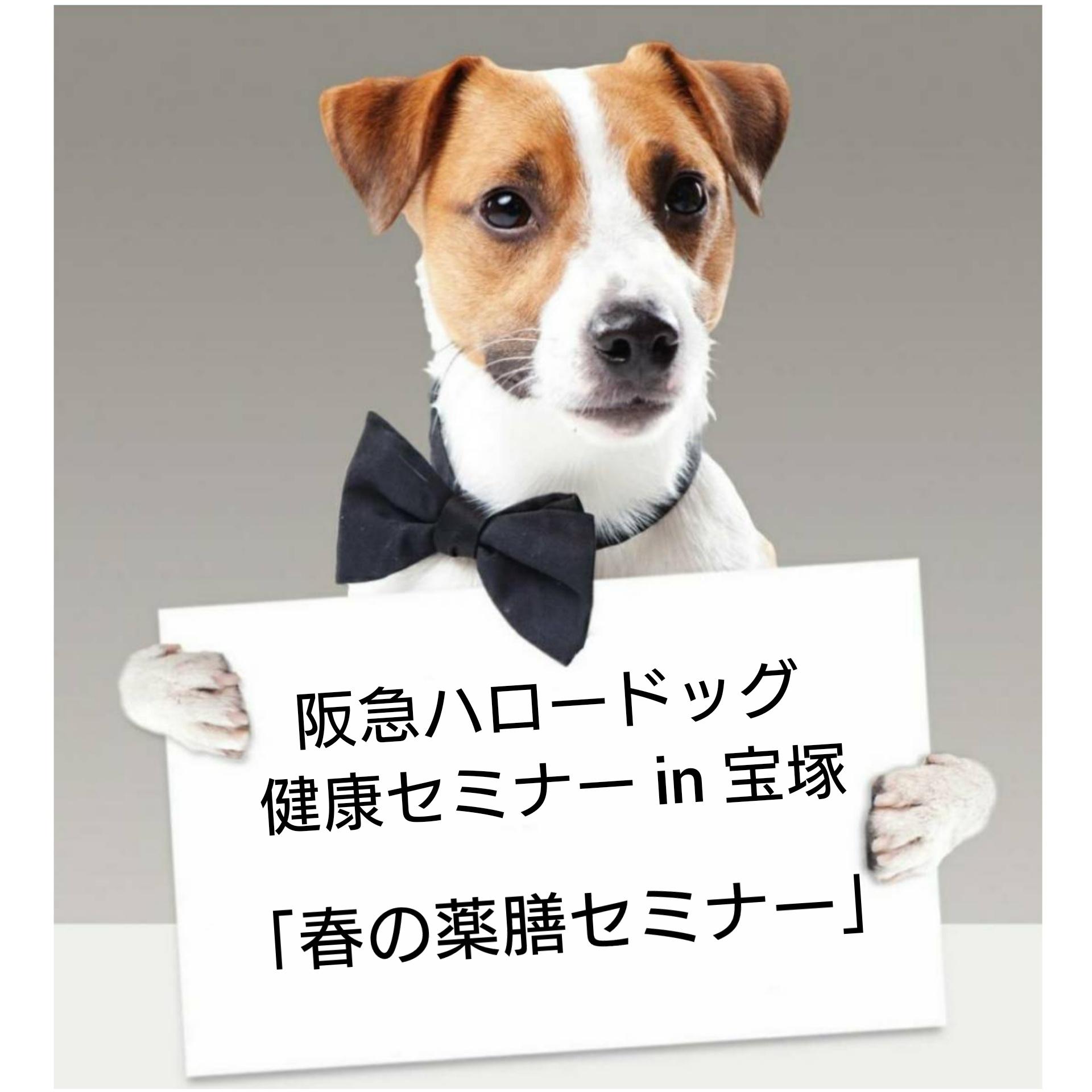 2021/3/27 宝塚 健康セミナー「春の薬膳セミナー」