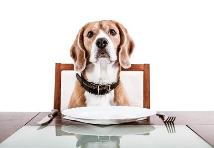 【フードコラム Vol.16】『脂肪』は愛犬の健康に良いの?