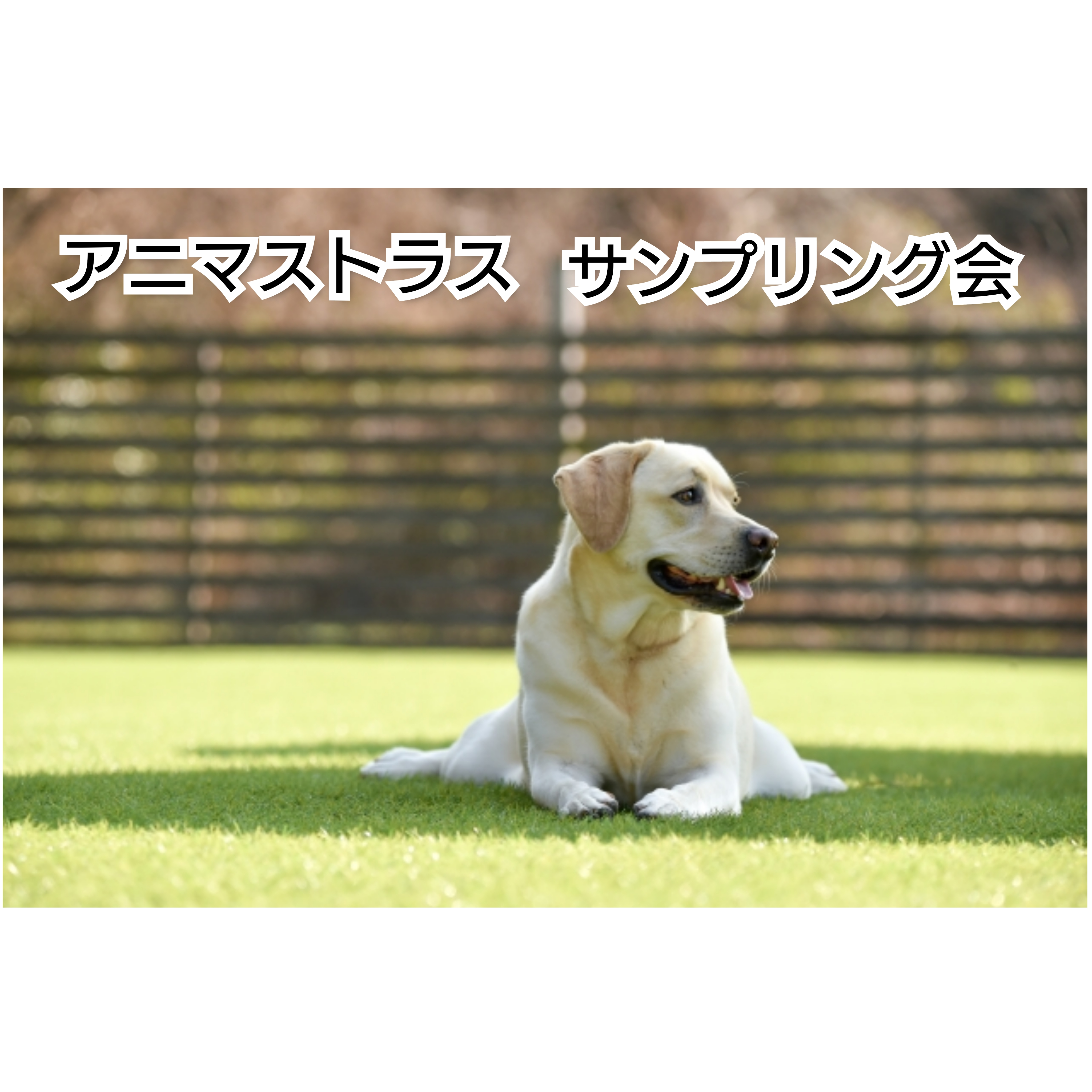 2021/4/8 宝塚 アニマストラスサンプリング会