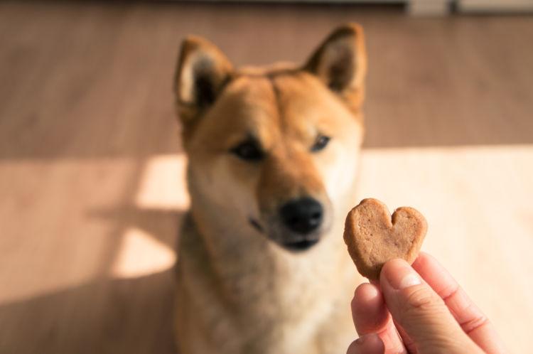 【フードコラム Vol.15】犬に炭水化物は必要?