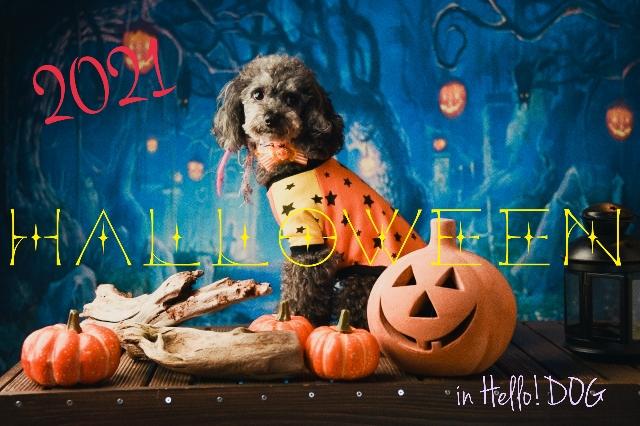 2021 HALLOWEEN in Hello ! DOG