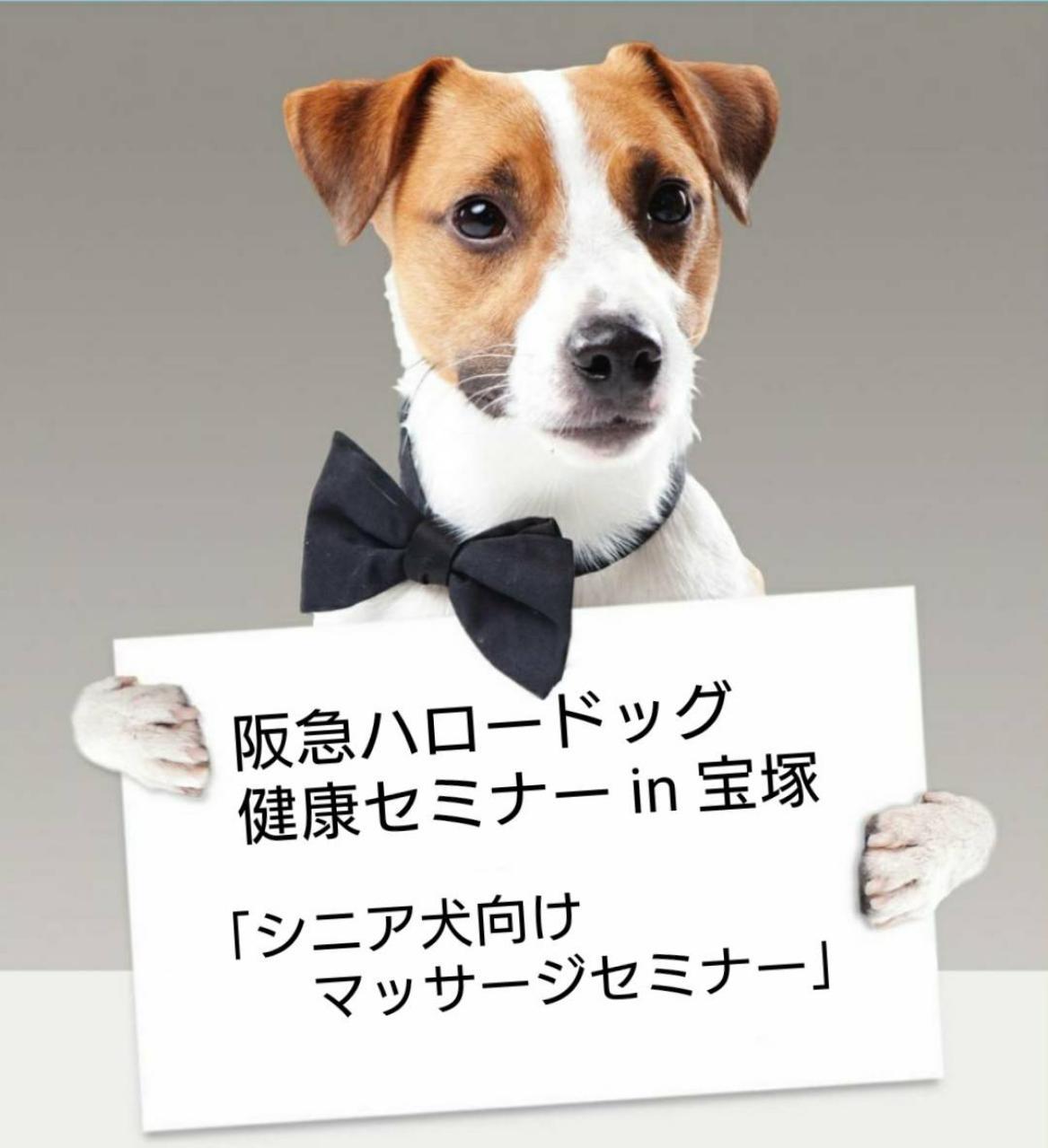 2021/9/18 宝塚 健康セミナー「シニア犬向けマッサージセミナー」
